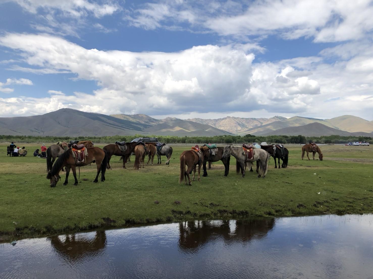 モンゴルの大草原!
