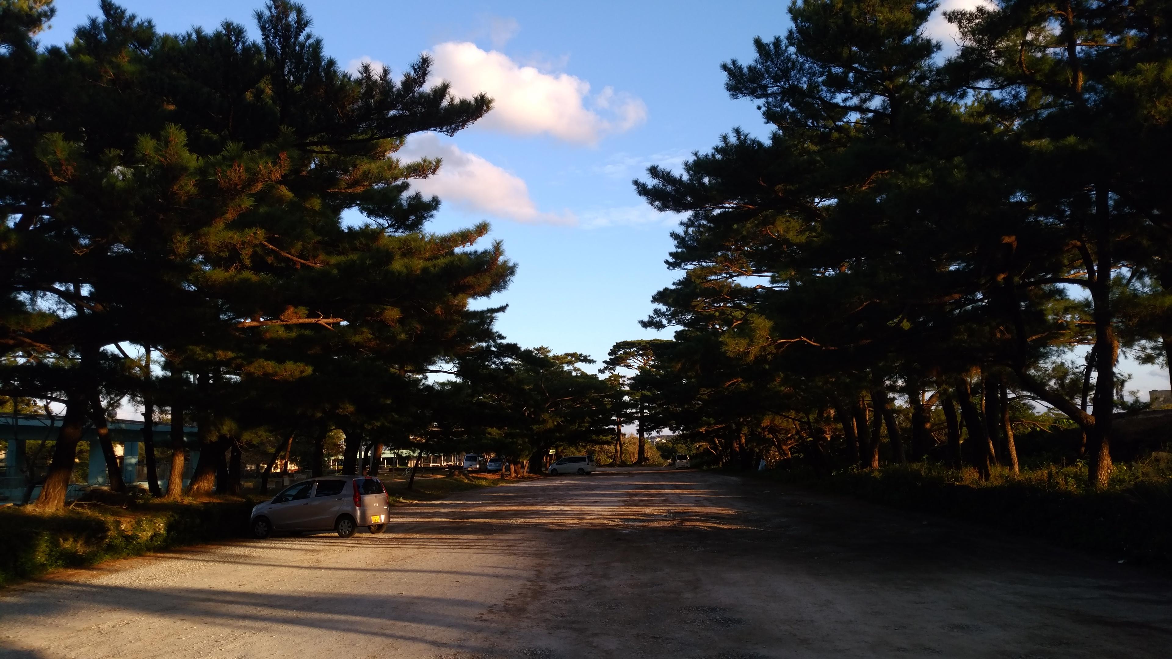 琉球松並木
