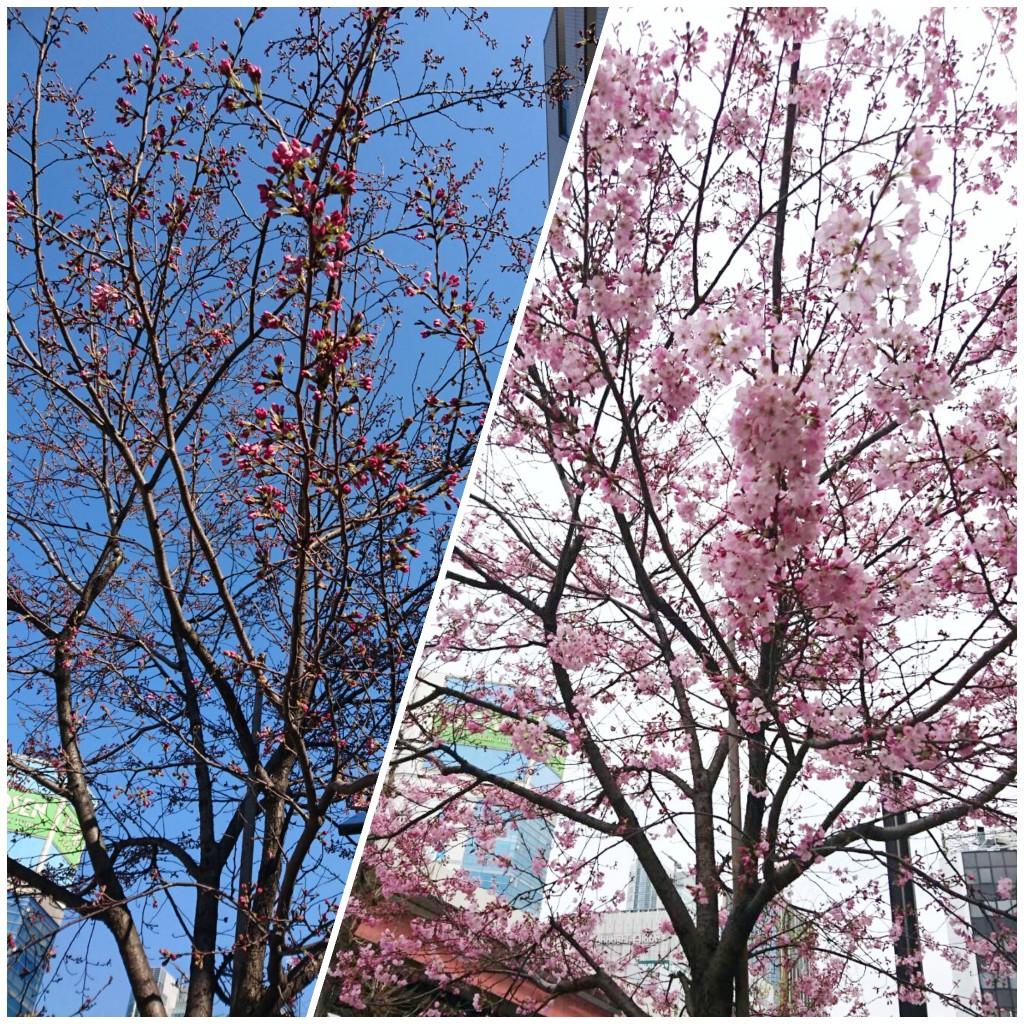 すっかり春の陽気